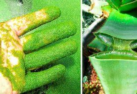 5 wilde Pflanzen, die dich töten können, und 5, die dein Leben retten können