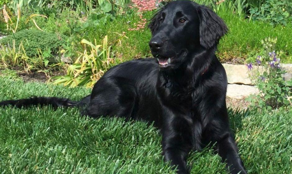 11 Wütende Geschichten von Rettungshunden, die die Häuser gefunden haben, die sie verdienen
