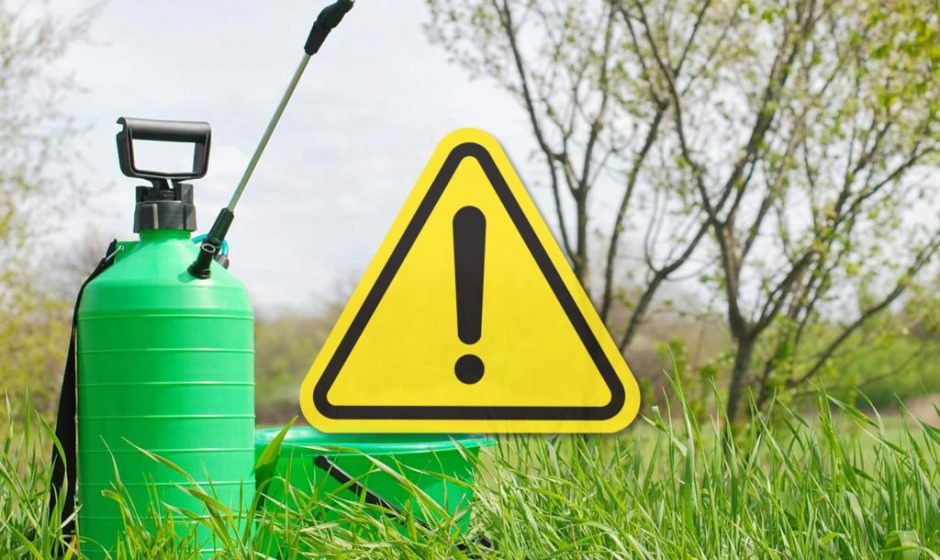"""5 """"harmlose"""" Dinge in Ihrem Garten, die tatsächlich giftig sind"""