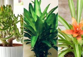 5 Pflanzen, die helfen können, die Raumluft zu reinigen, so die Wissenschaft
